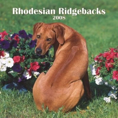 Rhodesian Ridgebacks 2008 Square Wall