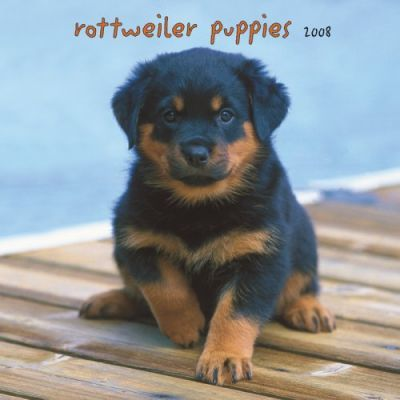 Rottweiler Puppies 2008 Square Wall