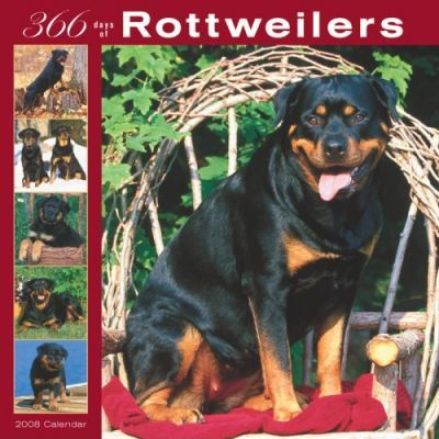 Rottweilers 366 Days 2008 Square Wall