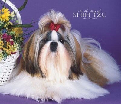 Shih Tzu, for the Love of 2008 Deluxe Wall
