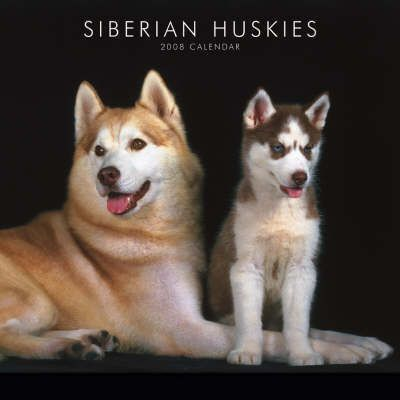 Siberian Huskies 2008 Square Wall