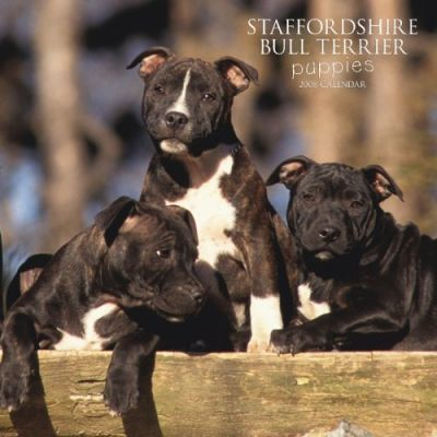 Staffordshire Bull Terrier Puppies 2008 Square Wall