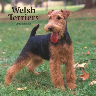 Welsh Terriers 2008 Square Wall