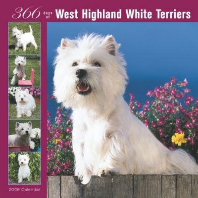 West Highland White Terriers 366 Days 2008 Square Wall