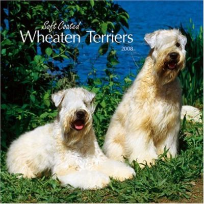 Wheaten Terriers, Soft Coated 2008 Square Wall