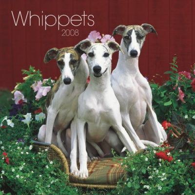 Whippets 2008 Square Wall