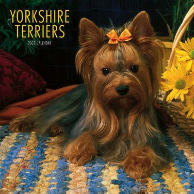 Yorkshire Terriers 2008 Square Wall