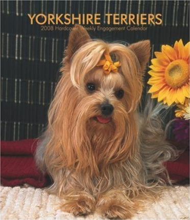 Yorkshire Terriers 2008 Hardcover Weekly Engagement