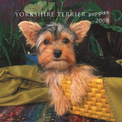 Yorkshire Terrier Puppies 2008 Mini Wall