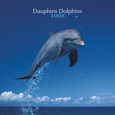 Dauphins/Dolphins 2008 Square Wall