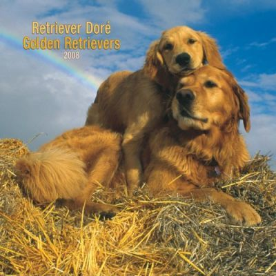 Retriever Dore' Golden Retrievers 2007square Wall