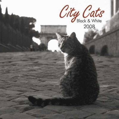 City Cats Black & White 2008 Square Wall