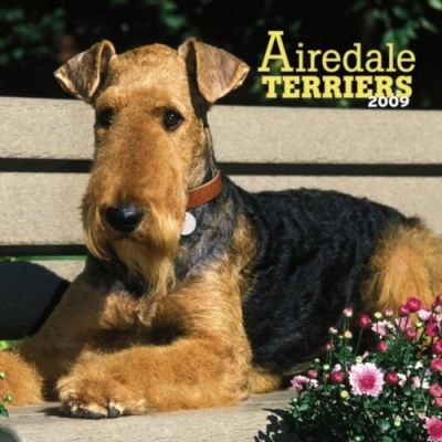 Airedale Terriers 2009 Calendar