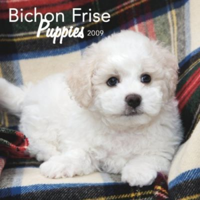 Bichon Frise Puppies 2009 Mini Calendar