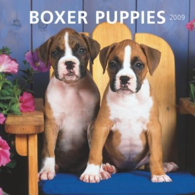 Boxer Puppies 2009 Calendar