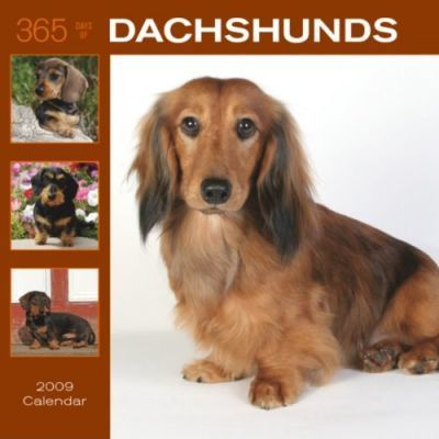 365 Days of Dachshunds 2009 Calendar
