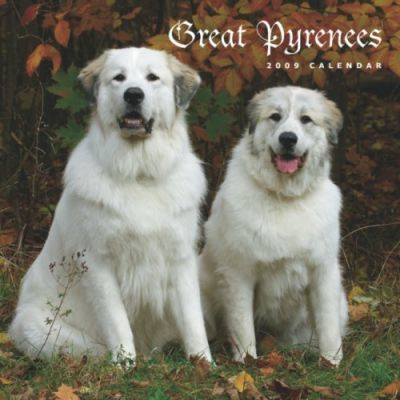 Great Pyrenees 2009 Calendar