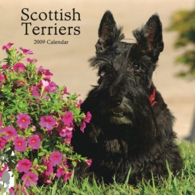Scottish Terriers 2009 Calendar