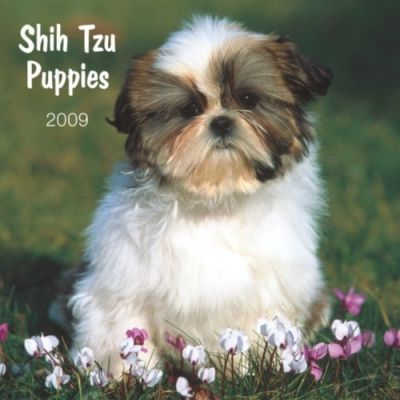 Shih Tzu Puppies 2009 Calendar