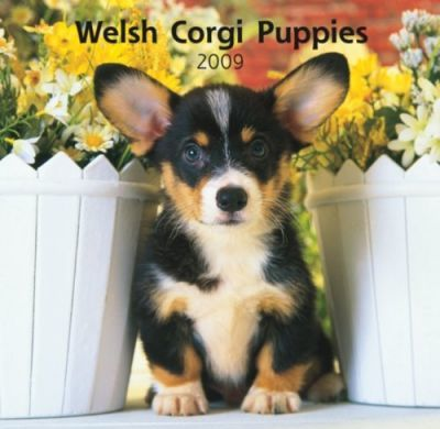 Welsh Corgi Puppies 2009 Calendar