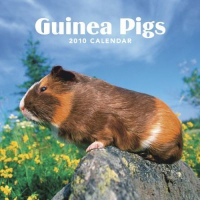 Guinea Pigs 2010 Wall