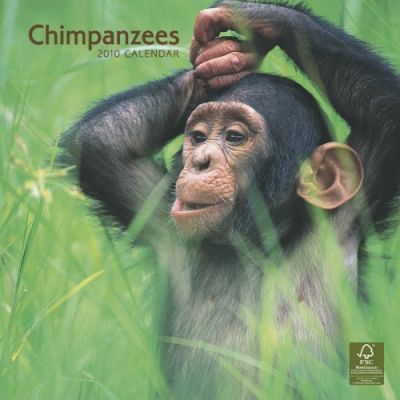 Chimpanzees 2010 Wall