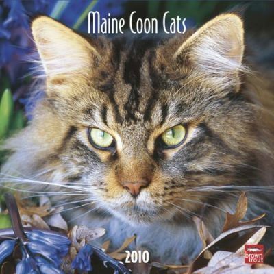 Maine Coon Cats 2010 Wall