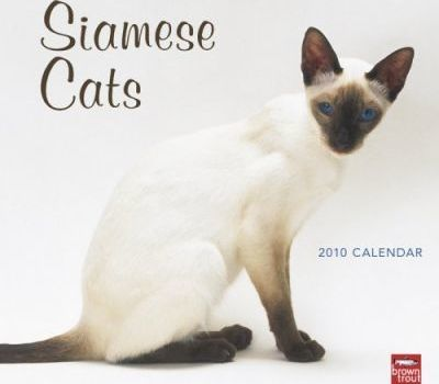 Siamese Cats 2010 Wall