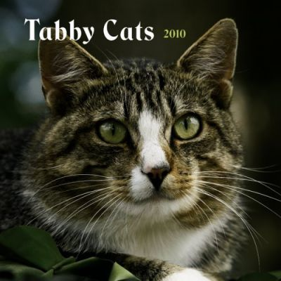 Tabby Cats 2010 Wall