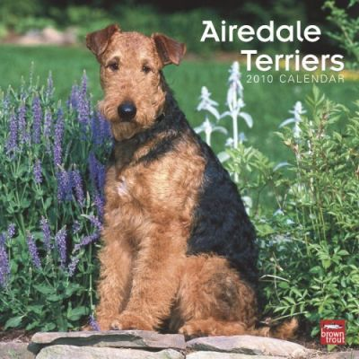 Airedale Terriers 2010 Wall