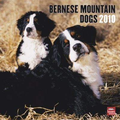 Bernese Mountain Dogs 2010 Wall
