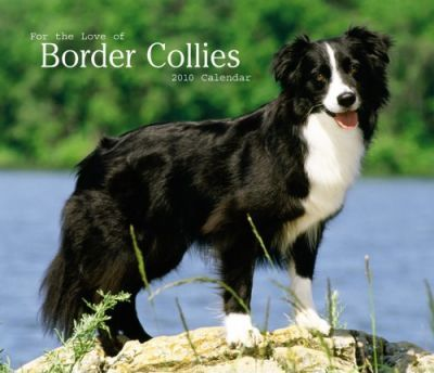 Border Collies, for the Love of 2010 Deluxe