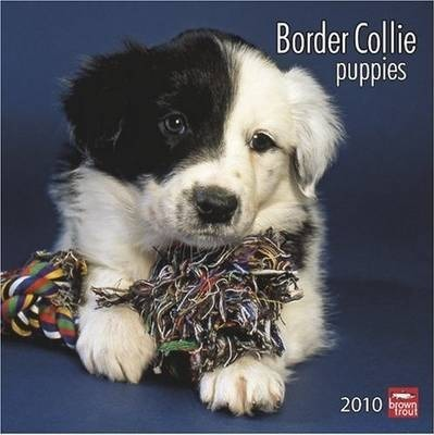 Border Collie Puppies 2010 Wall