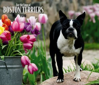 Boston Terriers, for the Love of 2010 Deluxe