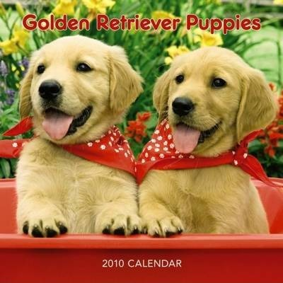 Golden Retriever Puppies 2010 7x7 Mini