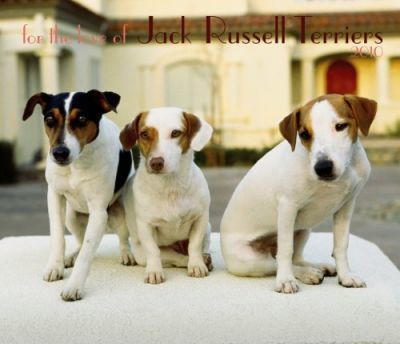 Jack Russell Terriers, for the Love of 2010 Deluxe