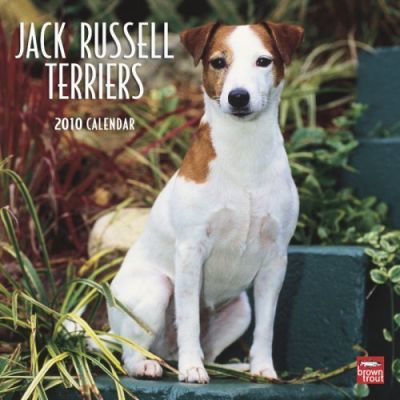 Jack Russell Terriers 2010 Wall