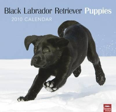 Labrador Retriever Puppies, Black 2010 Wall