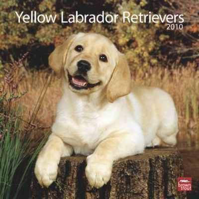 Labrador Retriever Puppies, Yellow 2010 Wall