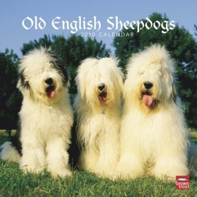 Old English Sheepdogs 2010 Wall
