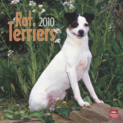 Rat Terriers 2010 Wall