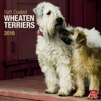 Wheaten Terriers, Soft Coated 2010 Wall