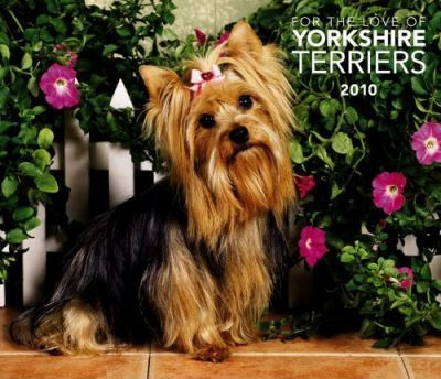 Yorkshire Terriers, for the Love of 2010 Deluxe