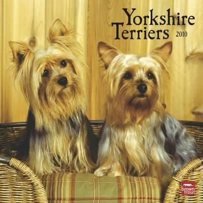 Yorkshire Terriers 2010 Wall