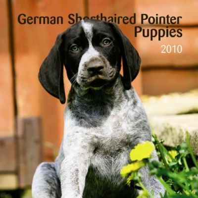 German Shorthaired Pointer Puppies 2010 7x7 Mini