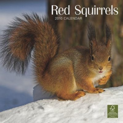 Squirrels, Red 2010 Wall