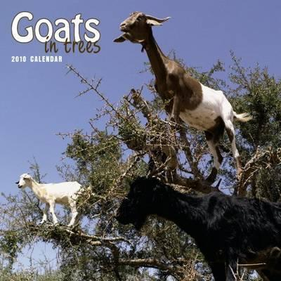 Goats in Trees 2010 Wall