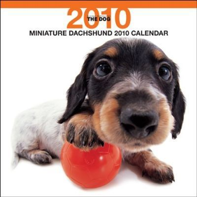 Miniature Dachshunds (Bt Artlist) 2010 Wall