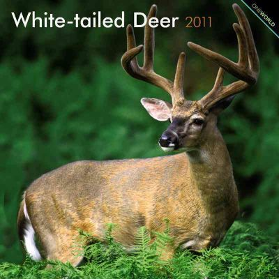 White-Tailed Deer 2011
