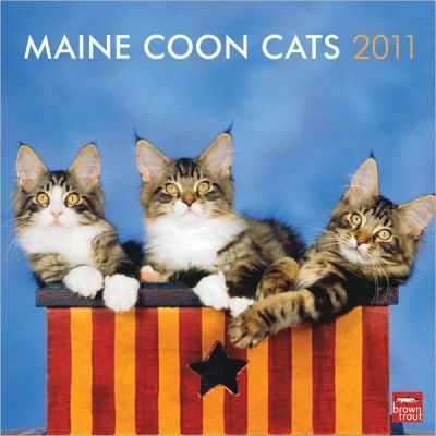 Maine Coon Cats 2011